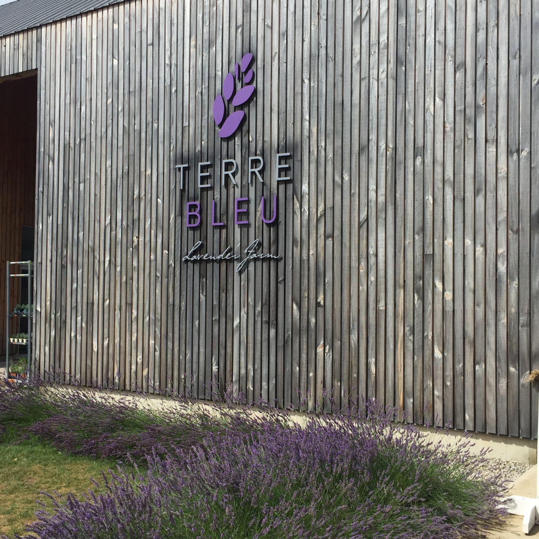 Day Trip: Terre Bleu Lavender Farm - PEACHY VIDA